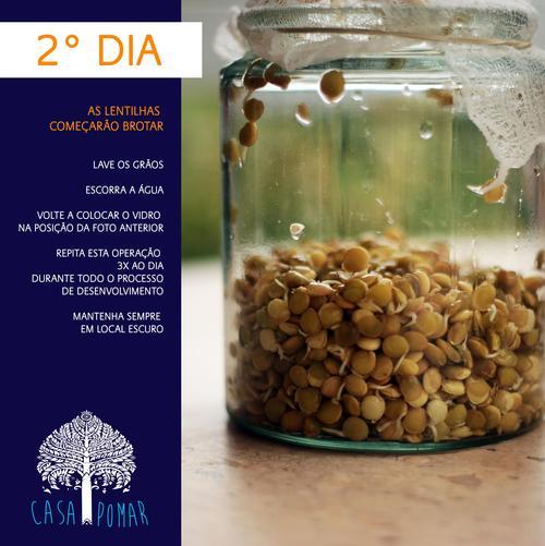 germinação de lentilhas