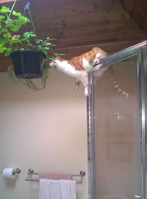 Những chú mèo khi trót chơi dại