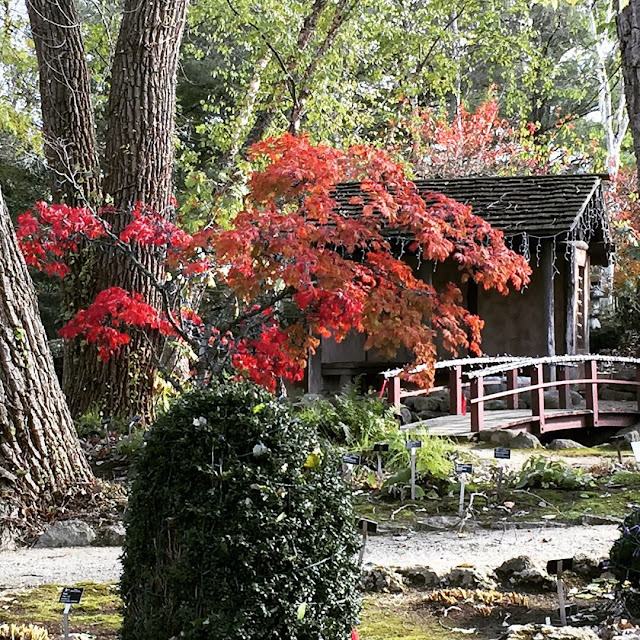 The red hues truly warm up the Japanese Garden at the Rotary Botanical Gardens in Janesville, Wisconsin.