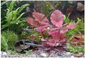 schnellwachsende Pflanzen