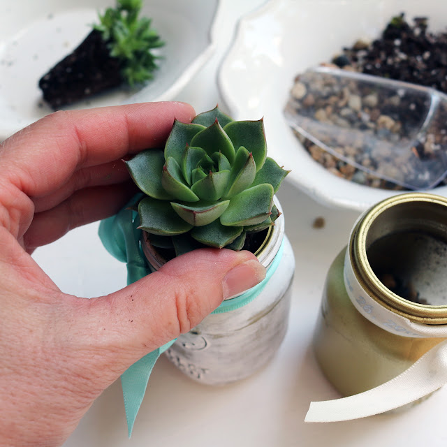 mini mason jar succulent favours | Creative Bag Blog