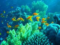 3 Perbedaan Ikan Pelagis dan Ikan Demersal