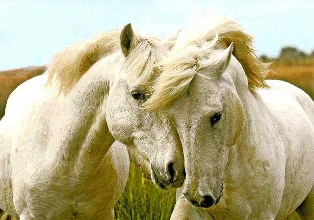 اجمل الخيول في العالم