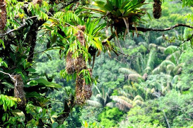 amazonewoud, natuur in frans-guyana,