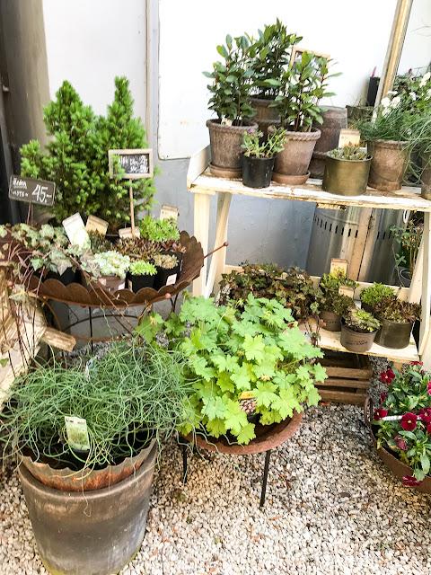 Mera trädgårdsinspo: penseer och krukor