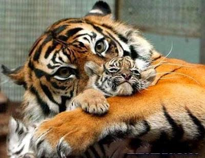 mamá y crias imagen tierna