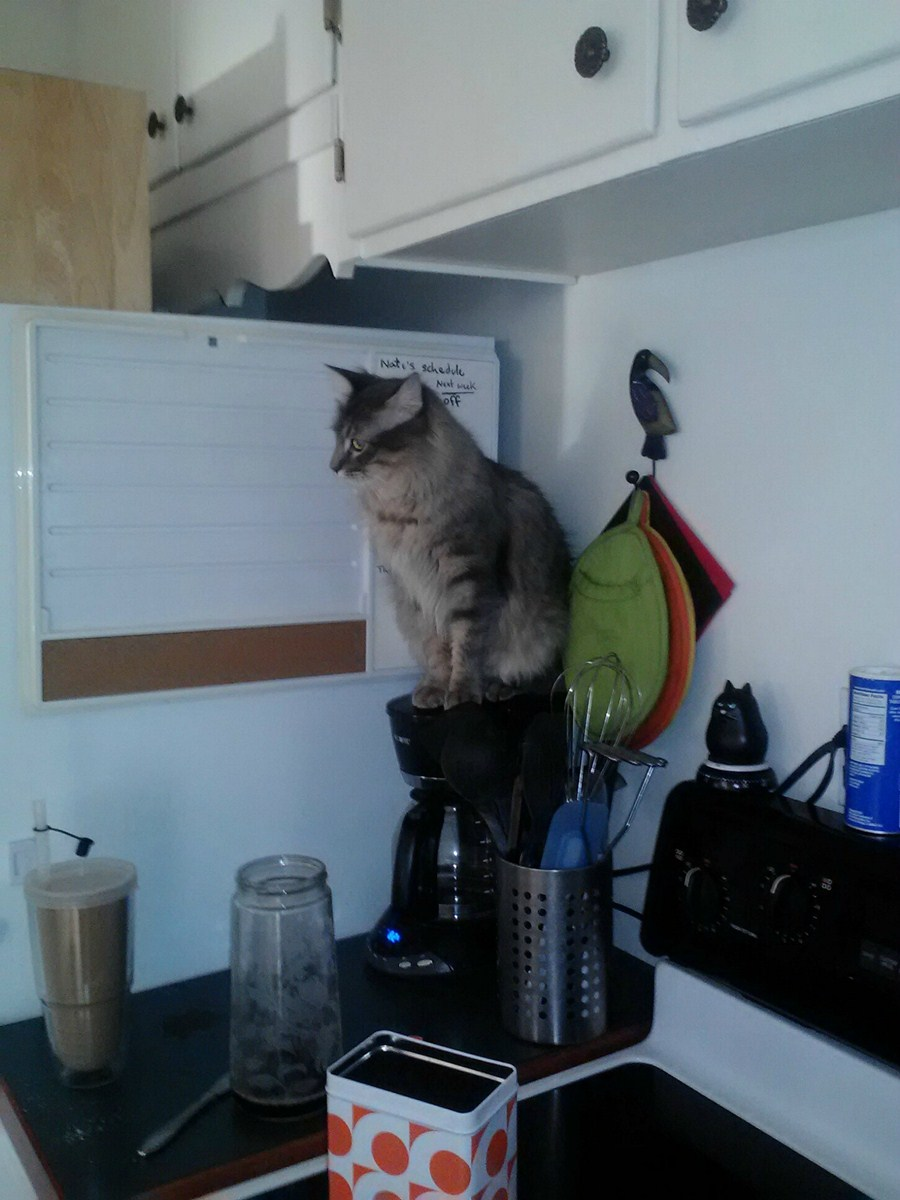 funny cats, cute cat pictures, cat sitting on coffee maker