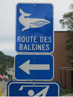 Route Des Baleines