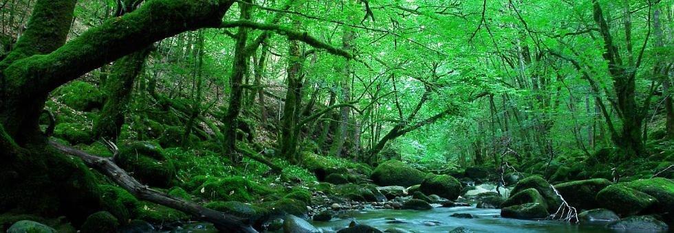 Vẻ đẹp trong tự nhiên - Bài viết tiểu luận tiếng anh