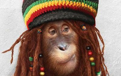 singe déguisé en bob marley
