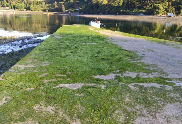 Grave denuncia del Sindicato de Fleteros Marítimos Angelmó
