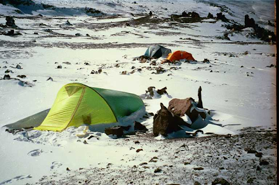 Επιβίωση στο δάσος και στο χιόνι