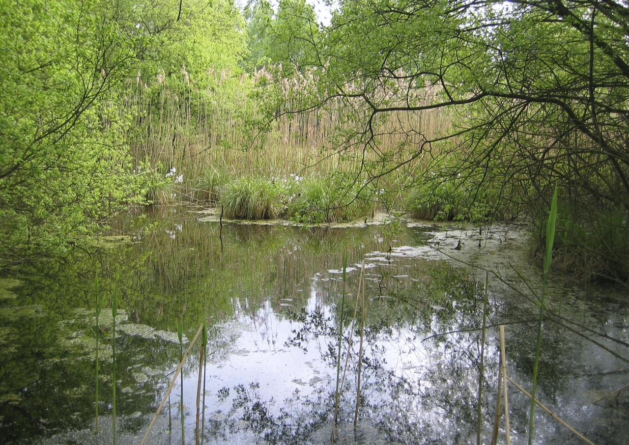 Märchenbrunnen: Was das Schilfrohr singt - Märchen von ... Das Schilfrohr