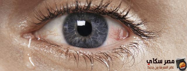 مم تتكون دموع العين وأهم فوائدها ؟ Tears eye
