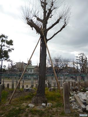 姫嶋神社記念植樹