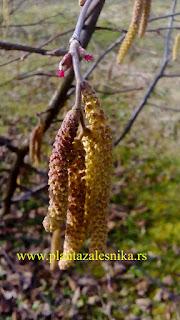 цветови леске