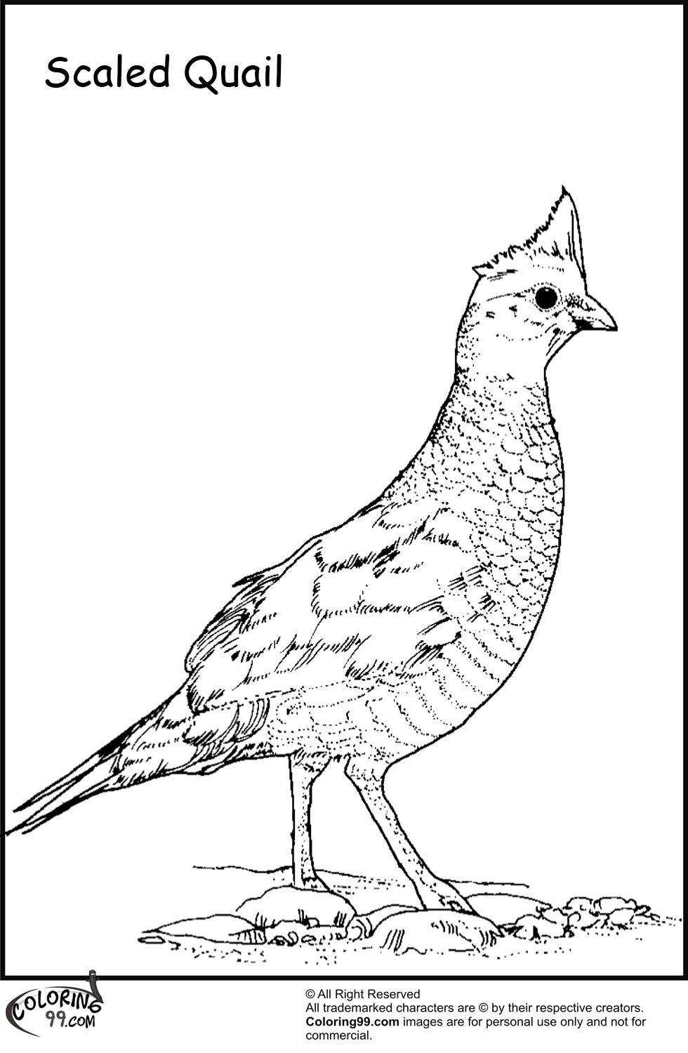 Bird with the title Quail Coloring Pages . You can bookmark this page ...