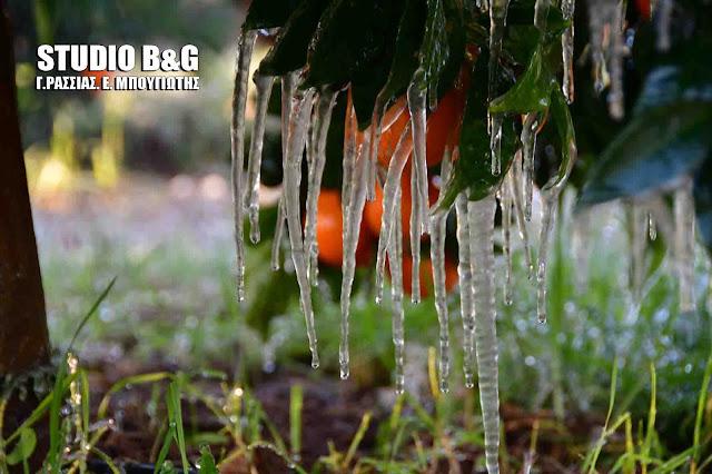 Στην κατάψυξη η Αργολίδα - Παγετός στον Αργολικό κάμπο (βίντεο)