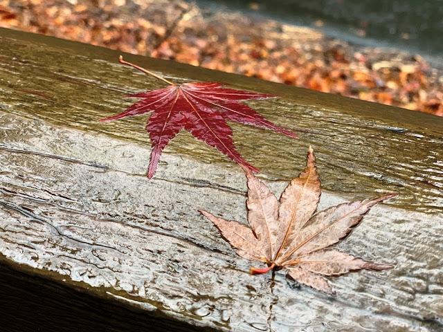 欄杆上的楓葉