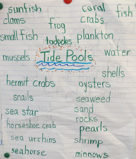 Brainstorm and list animals and plant life that can be found in tidepools.