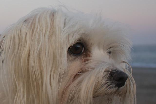 la mirada perdida del perro