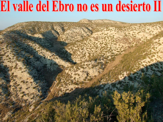 El valle del Ebro no es un desierto II
