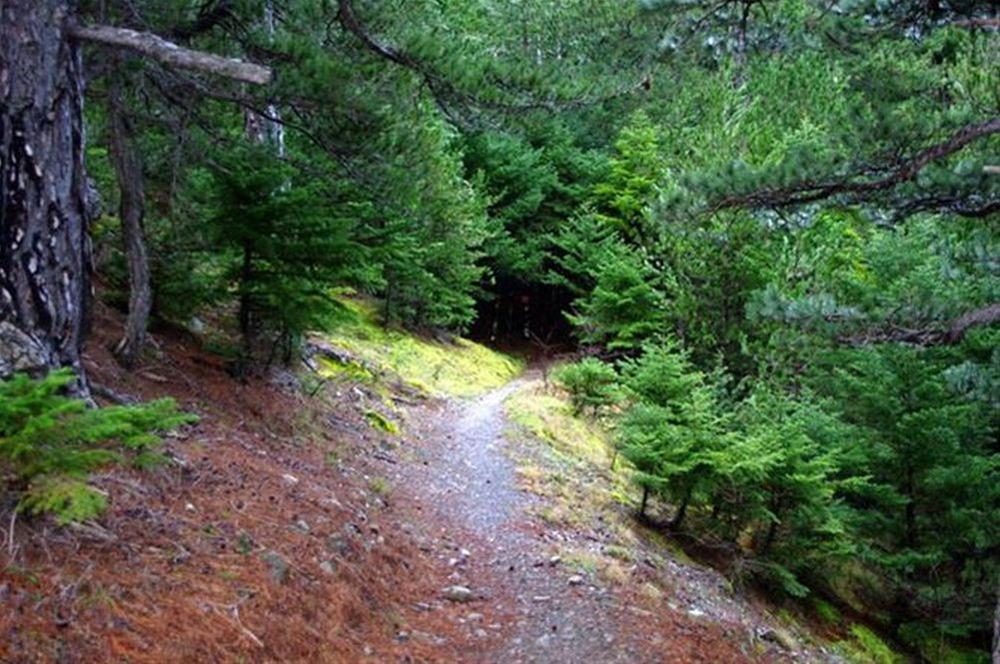 Στο δάσος της Ουρανούπολης βρέθηκαν η 54χρονη Ρωσίδα και η 11χρονη κόρη της.