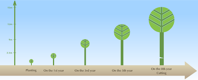 Παυλώνια για καλλιέργεια