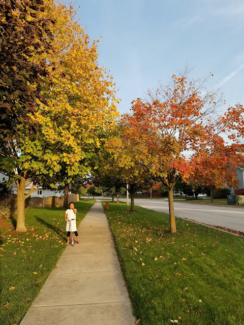 street with maple trees in fall colors