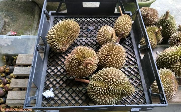 Buah durian kualiti terbaik