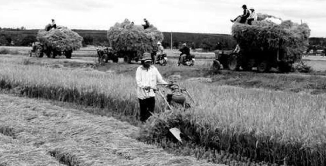 Cải cách điền địa (ruộng đất) dưới thời VNCH - Dân Làm Báo