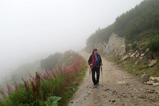 Przy szlaku gromadnie rośnie Wierzbówka kiprzyca.