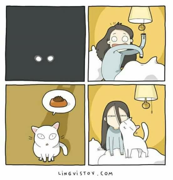 humor grafico gato que quiere comer de noche