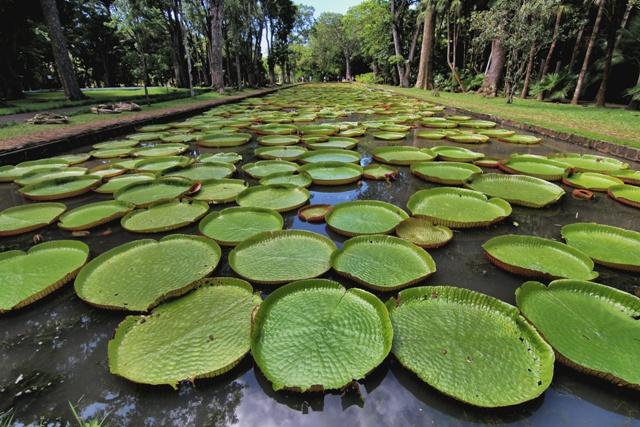 Jardín Botánico Pamplemousses en Port Louis