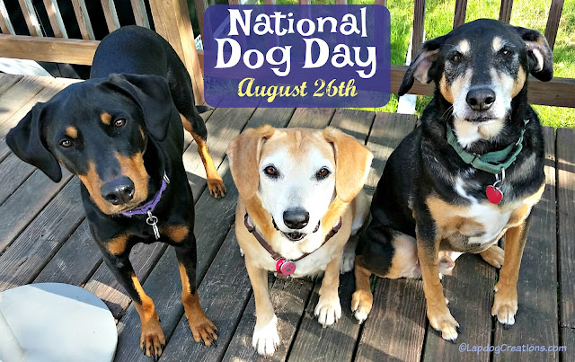 national dog day 3 rescue dogs