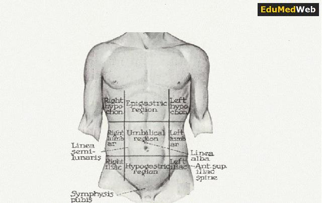 abdominal-regions
