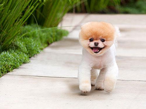 Dog Photos Collection