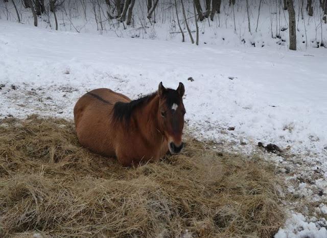 cavallo a santo stefano d'aveto