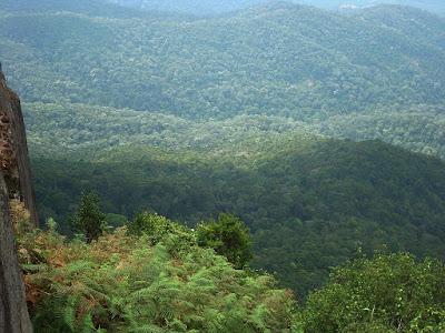 """La journée internationale de la forêt se célèbre sous le thème """"les forêts au service des villes durables"""""""