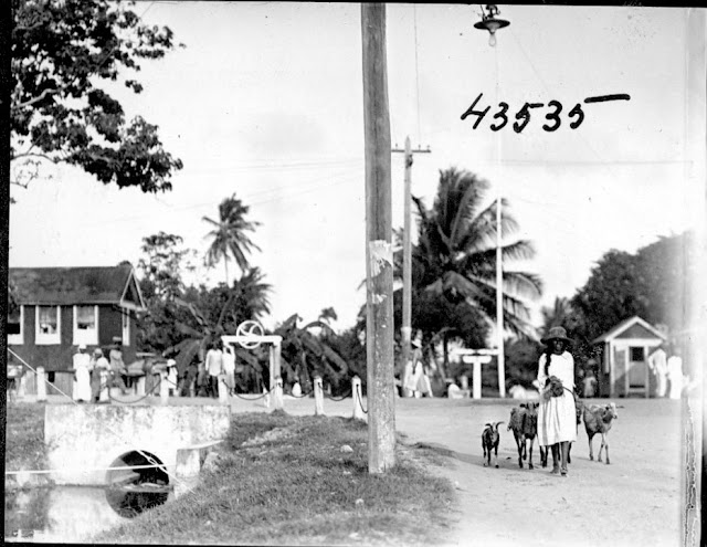 Street with people, palm tree in background. Goats. 1922. Guyana, South America