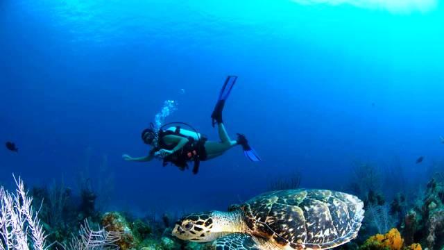 ท่องเที่ยว, แนวหินปะการัง, มัลดีฟส์, สถานที่ดำน้ำ, สถานดำน้ำทั่วโลก, อันดับสถานที่ดำน้ำ, เกาะเคย์แมน อาณานิคมโพ้นทะเลของสหราชอาณาจักร (Cayman Islands, British Overseas Territory)