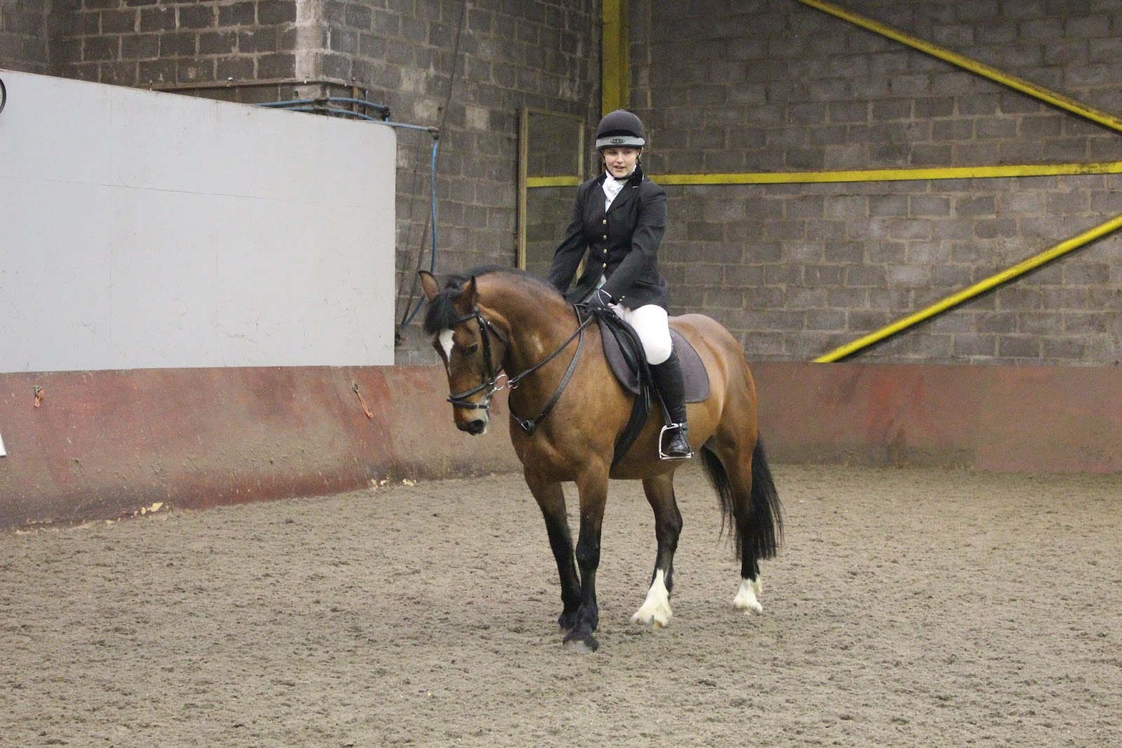 northumbria equestrian society