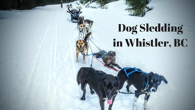 Dog Sledding In Whistler, BC