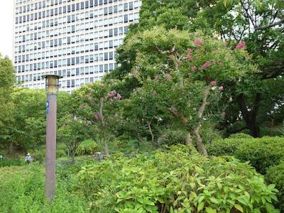 大阪城公園 城南地区 サルスベリ
