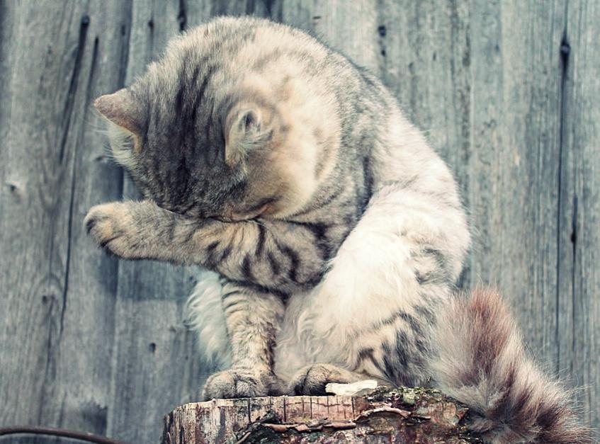 Download 89+  Gambar Kucing Paling Lucu Paling Bagus HD