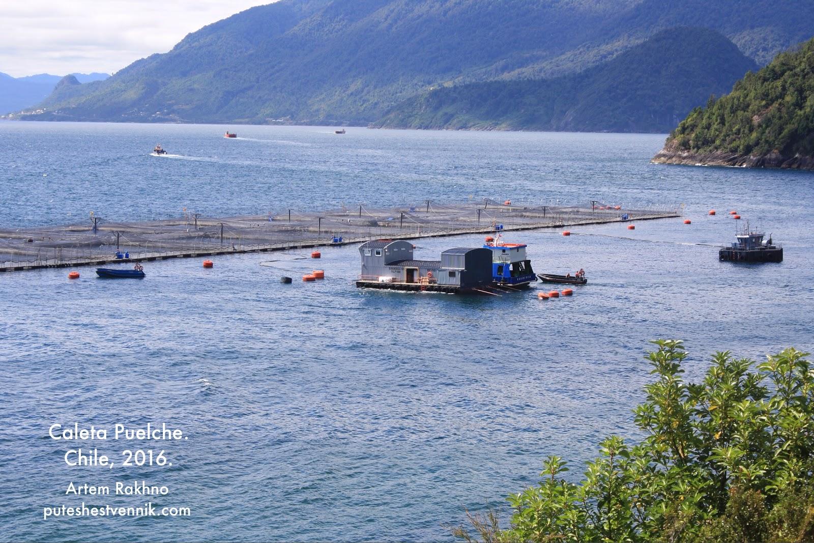 Разведение рыбы в Чили