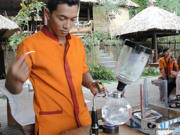 make kopi luwak at coffee plantation in Bali, Indonesia