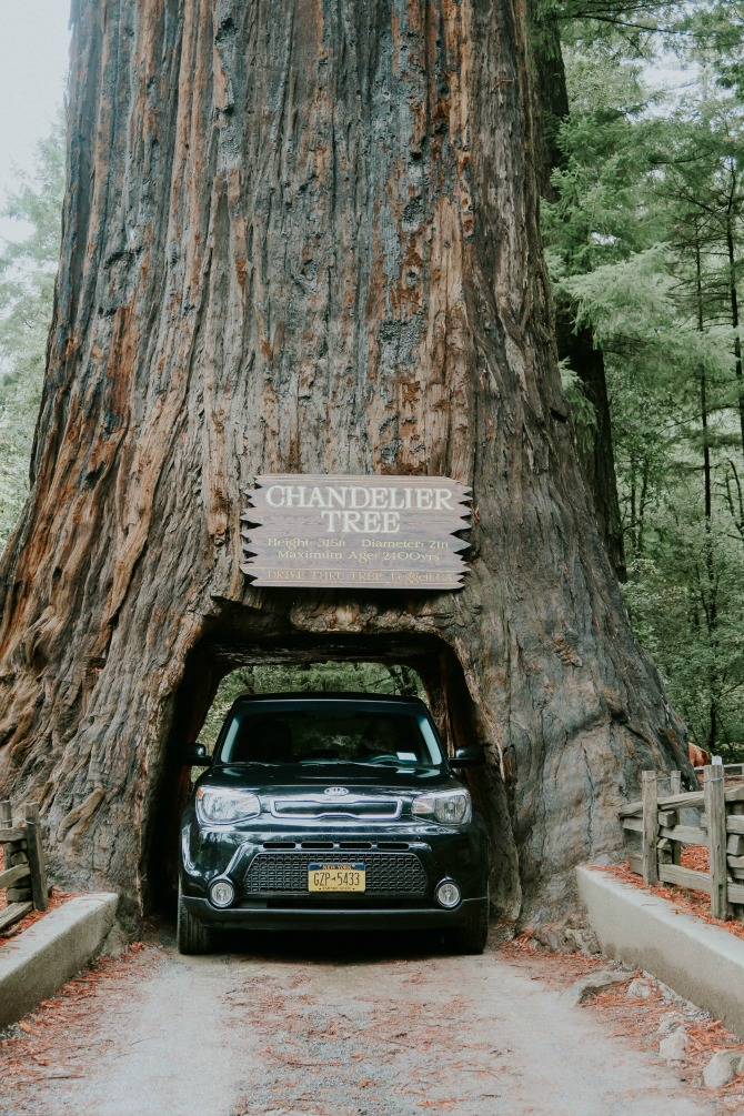 things to do along the northern california coast: visit red tree forests
