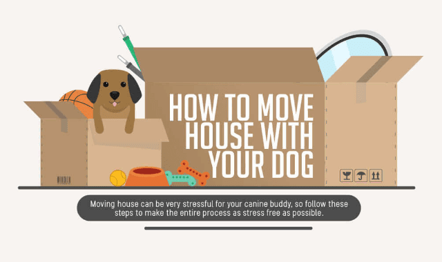 How To Move House With Your Dog