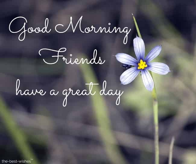 good morning friends have a great day